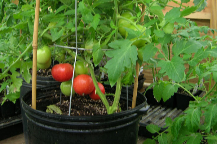 How to grow Vegetables in pot | Best Vegetable for container gardening