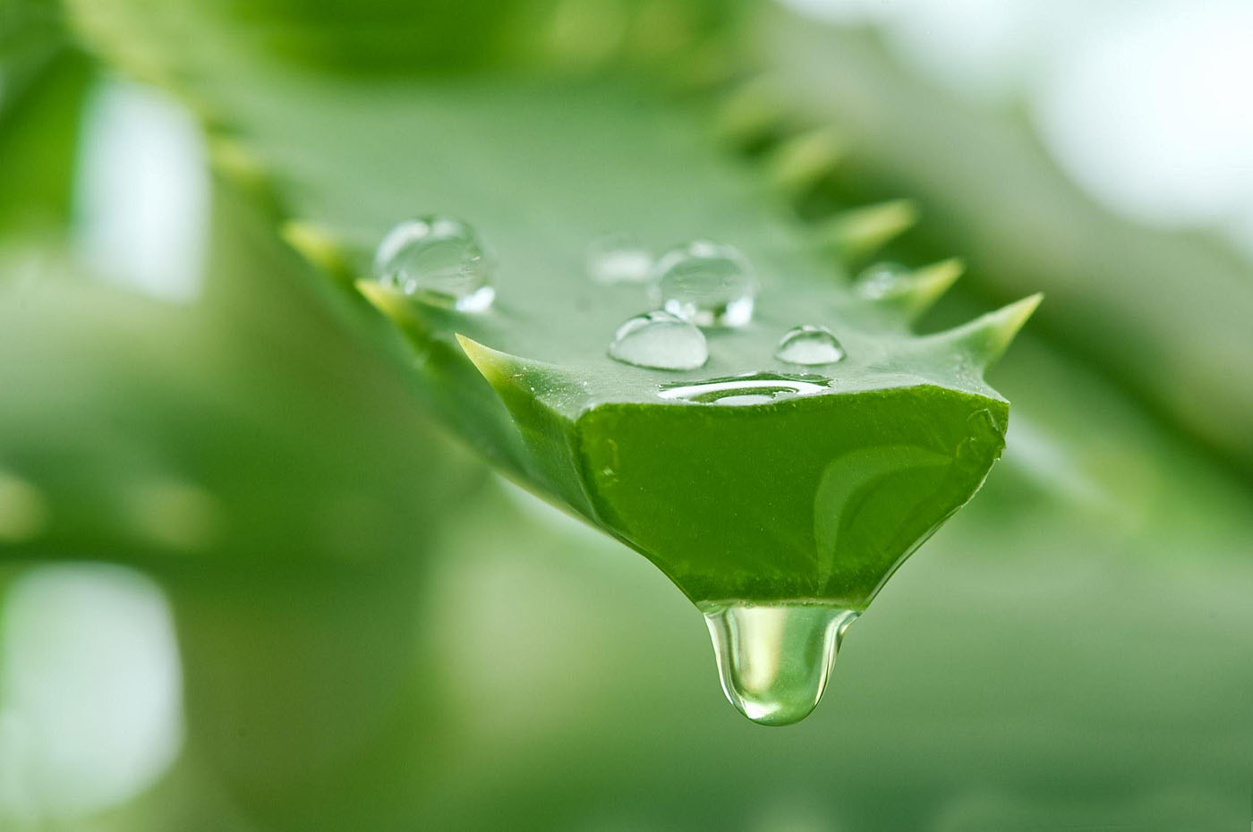 Amazing Benefits of Aloe Vera: Nature Bring