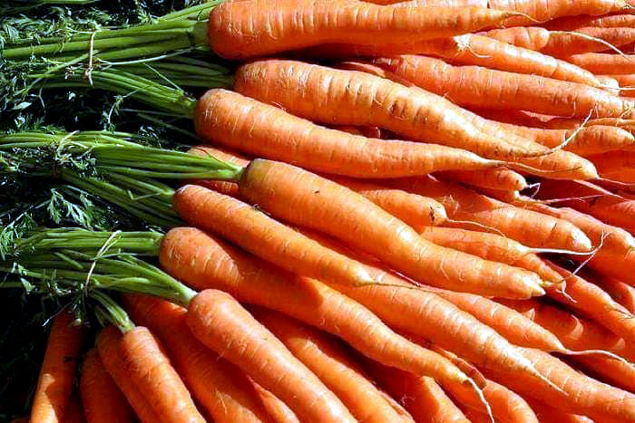Growing carrots in containers | How to grow Carrots at home