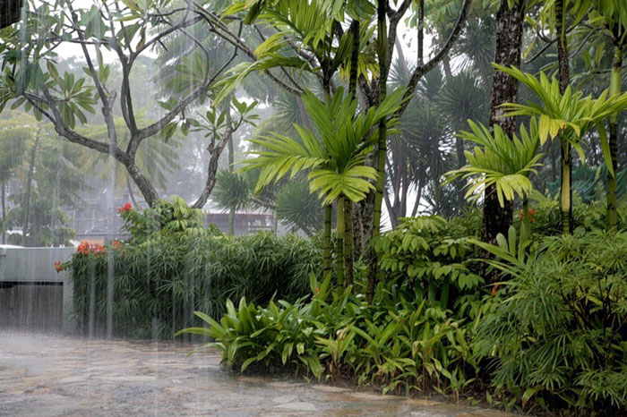 During the monsoon maintain your home garden | Monsoon care