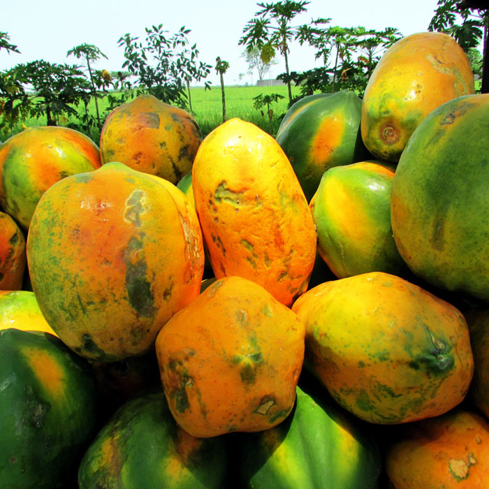Papaya fruit benefits | Health Benefits of Papaya and its nutrients