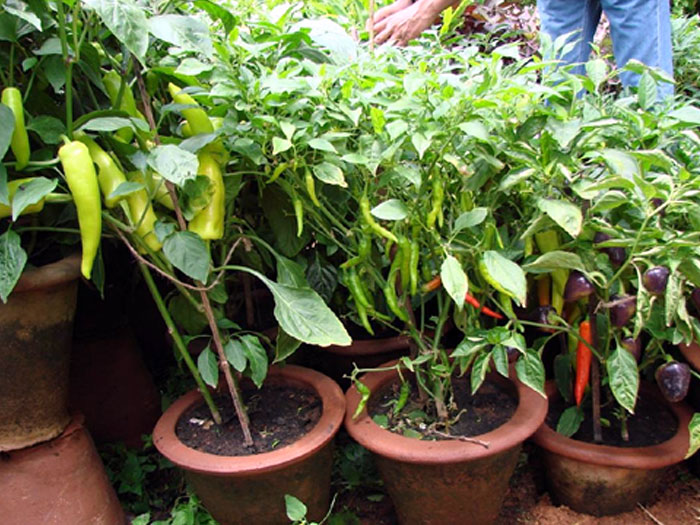 kitchen garden in balcony 11 Small Space Gardening Ideas Container Gardening