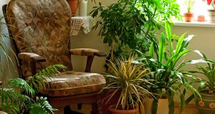 7 indoor plants that greenery around you | Decorate dark corners