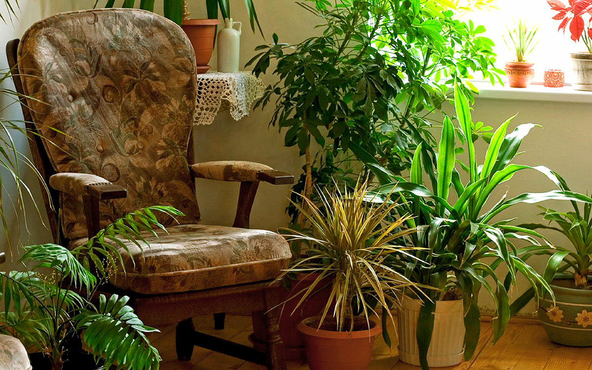 7 indoor plants that greenery around you | Houseplants