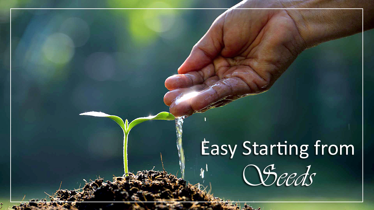 Easy Starting from Seeds | Plants from Seeds