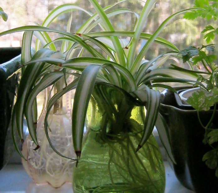 indoor plants | Houseplants