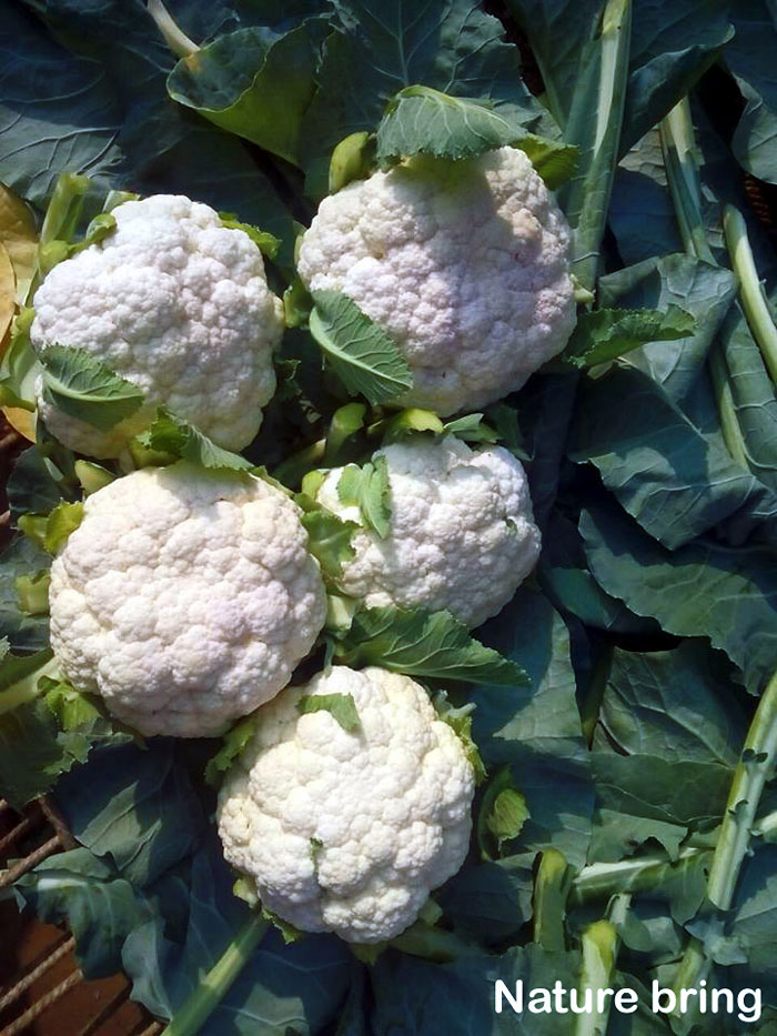 How to grow Cauliflower | Growing cauliflower in containers