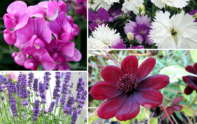 10 Most Fragrant flowers for your garden | aromatic plants