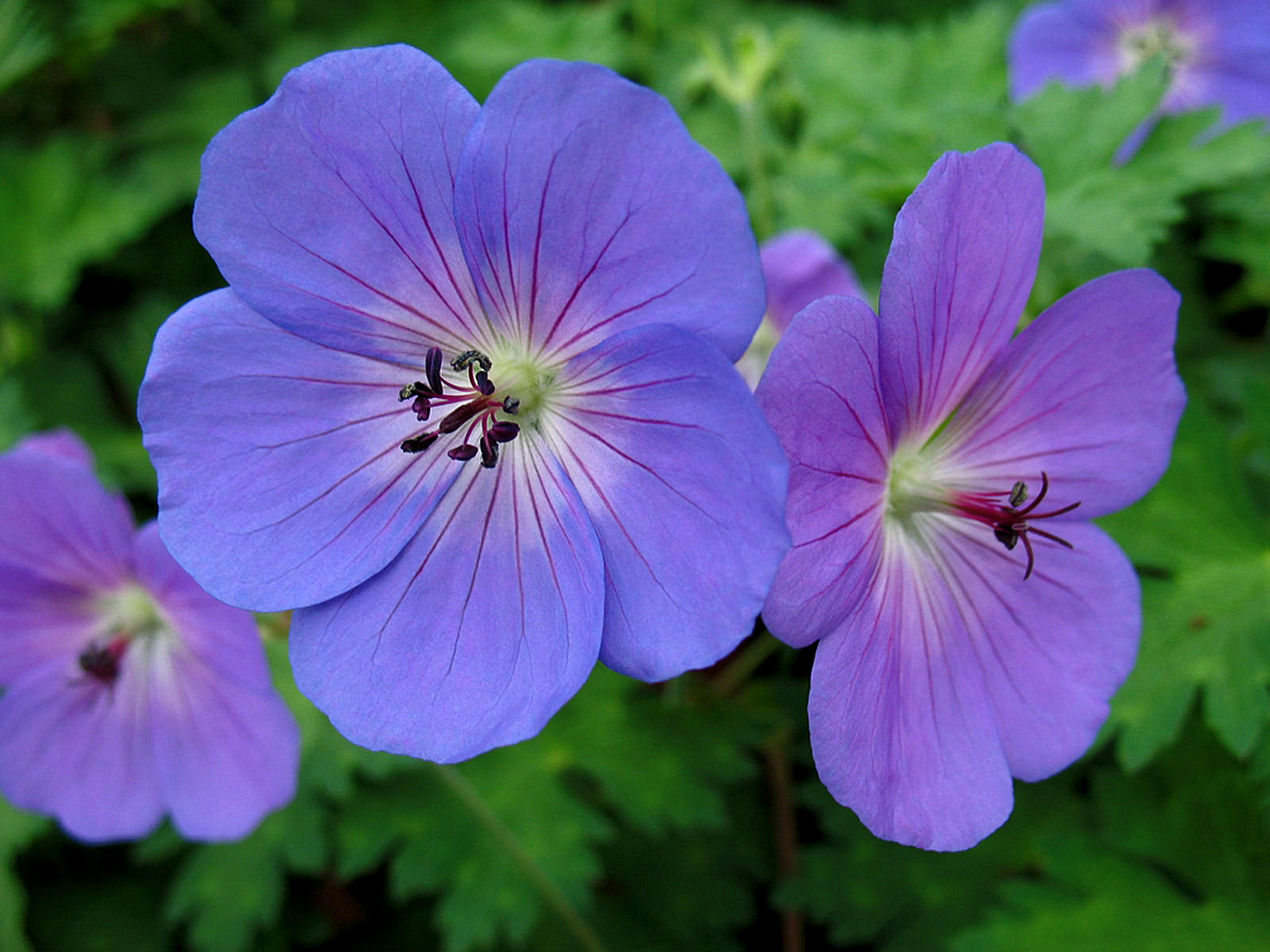 10 Most beautiful perennial flowers | Easy growing tips