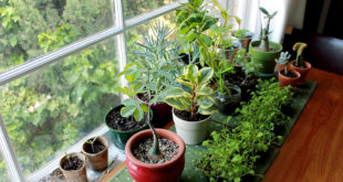 Indoor Planting | Greenery inside your home