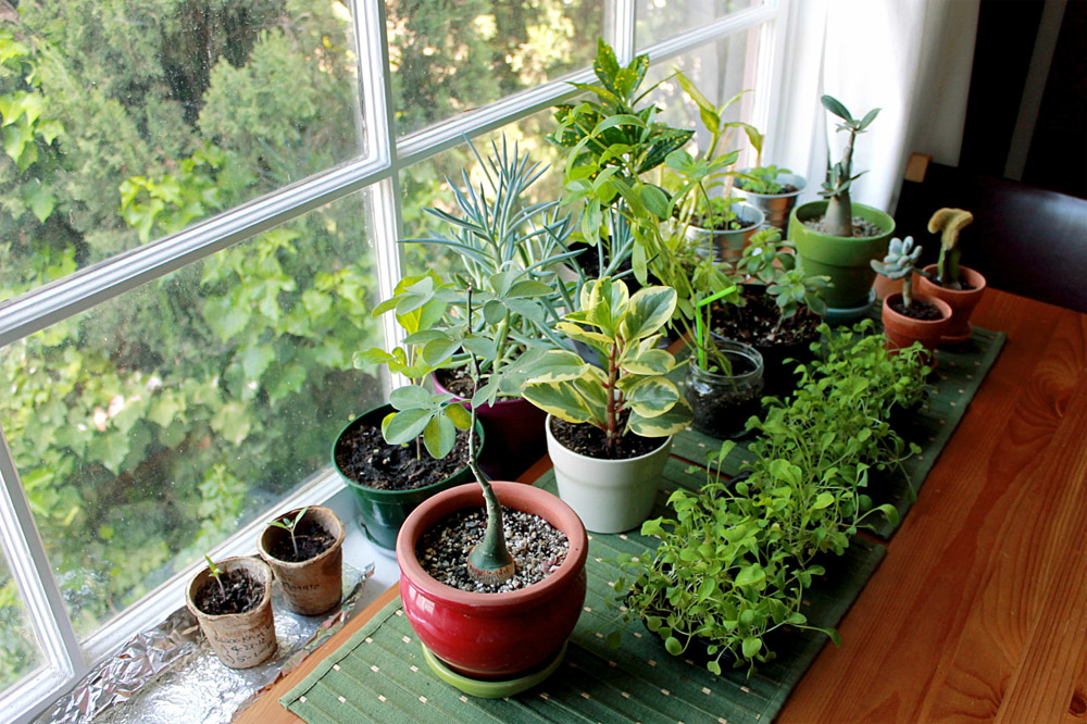 Indoor garden | How to grow beautiful indoor plants at home | indoor plant care