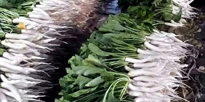 Radish   Growingradishes   Root vegetables