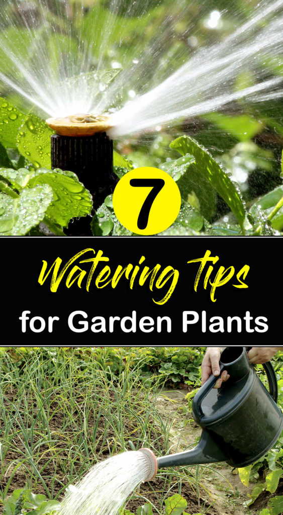 Watering | how to water plants
