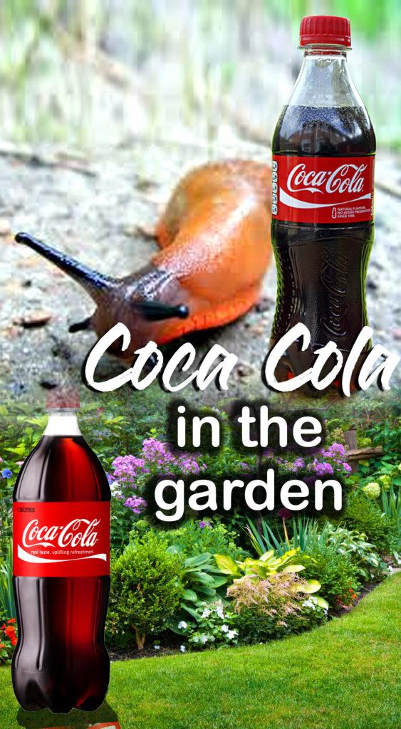 Coca Cola | Coca Cola in the garden