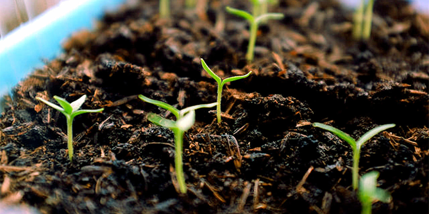 9 Great way to use Coffee grounds | How to use Coffee ground in the garden