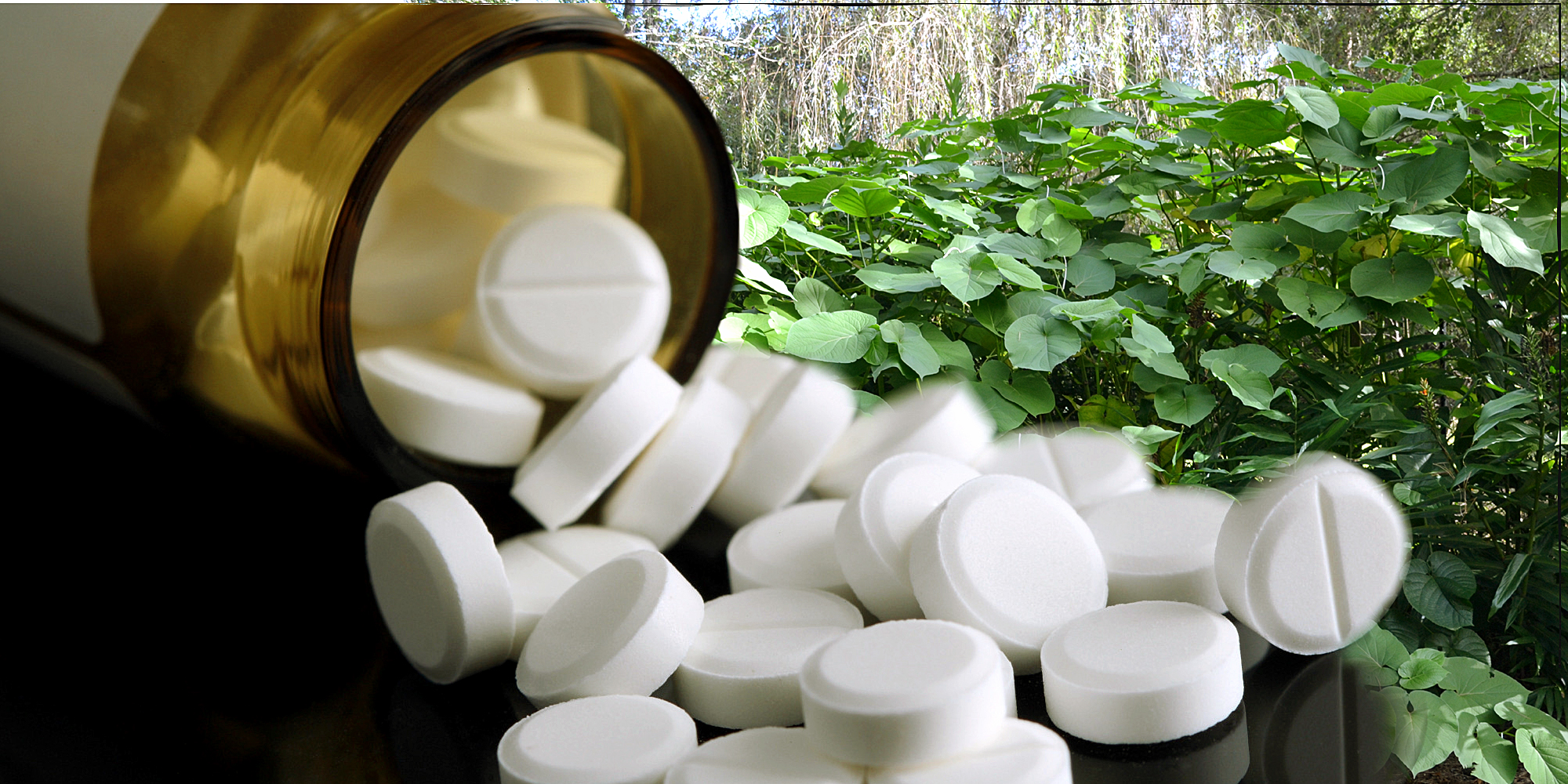 How to use Aspirin in the garden | Nature Bring