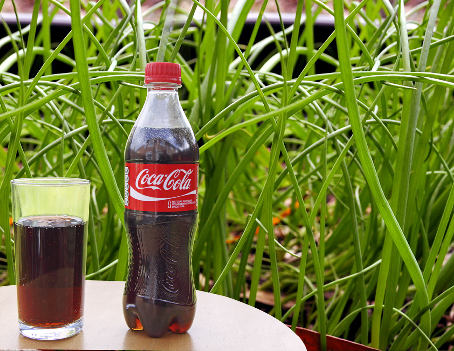 Coca Cola in the garden | Uses Coca Cola in garden General tips
