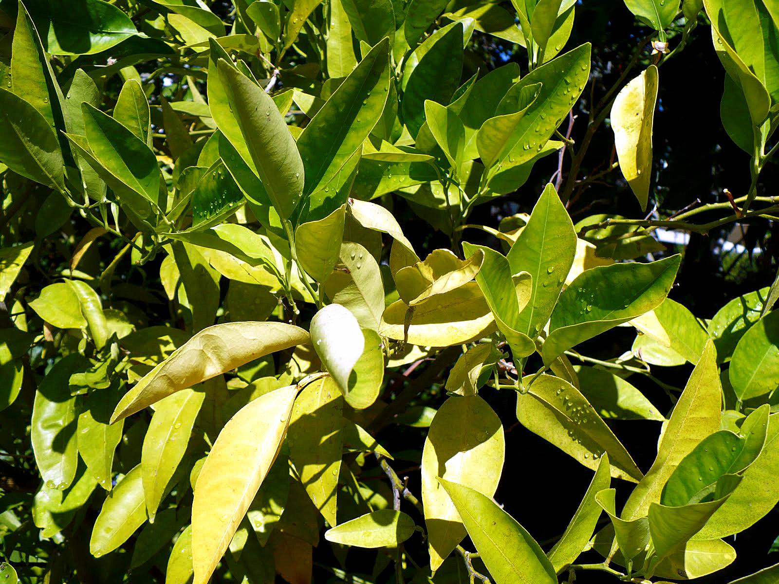 Diy Indoor Herb Garden With Grow Light