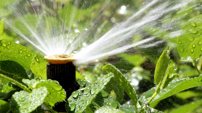 How to water plants | Watering tips for Garden Plants
