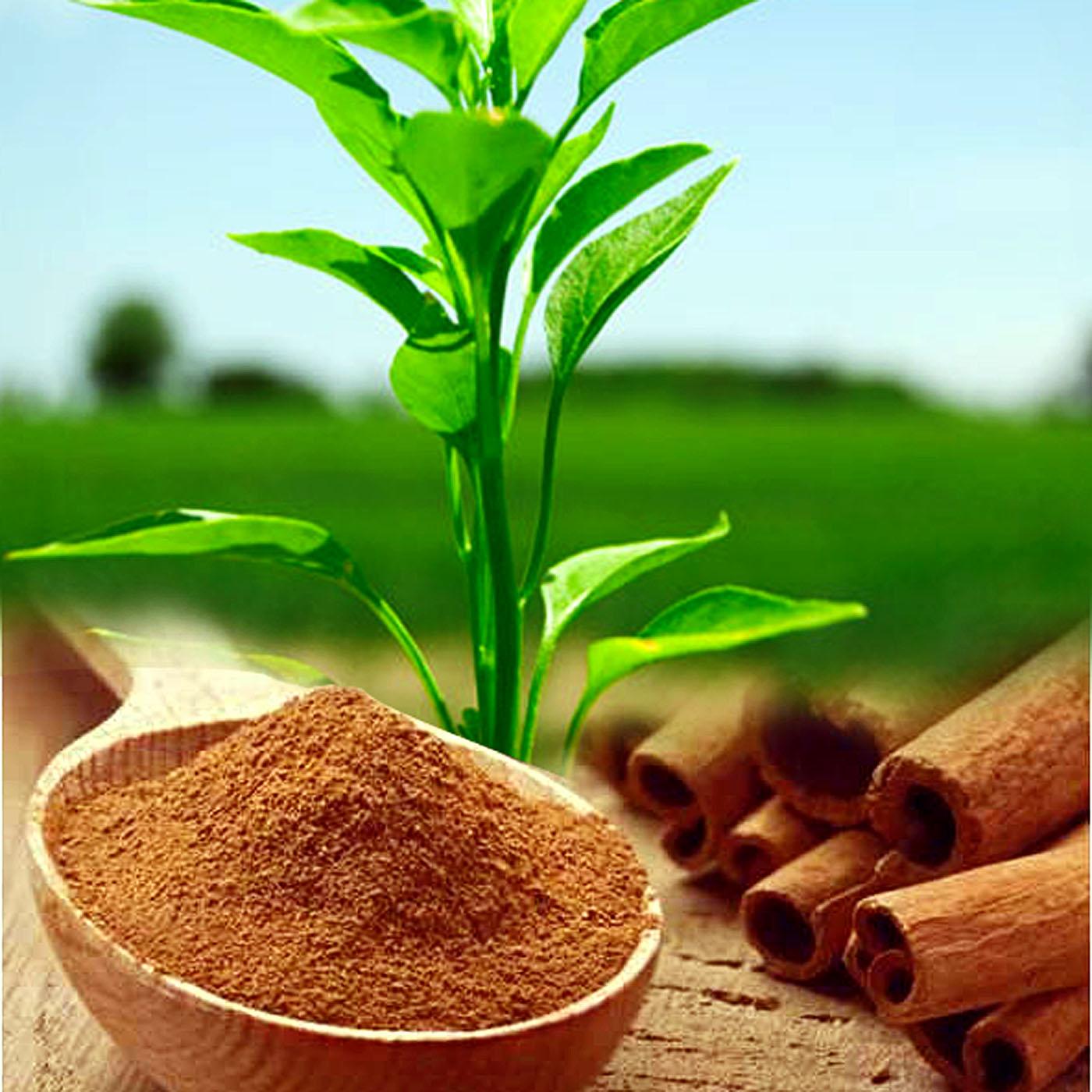 7 Surprising ways to use Cinnamon in the garden | Garden benefits of Cinnamon