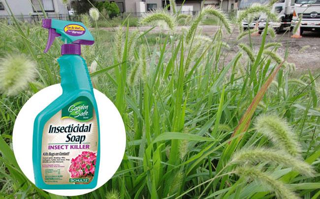 Homemade Herbicides | Natural weeds killer