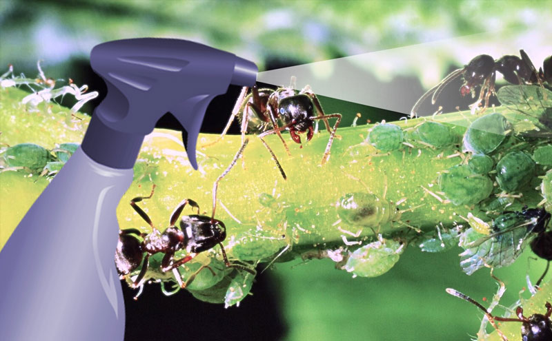 natural ways to get rid of ants | How to get rid of Ants