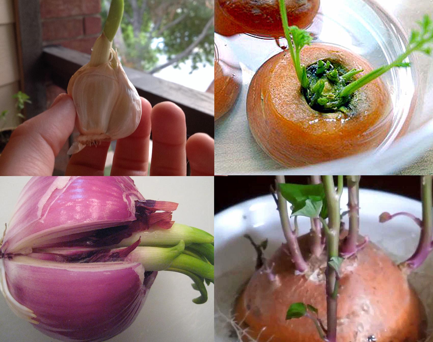 10 Vegetables can be Re grow again |Food Scraps Growing
