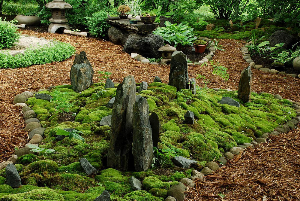 Grow your own Moss Garden | How to get mosses