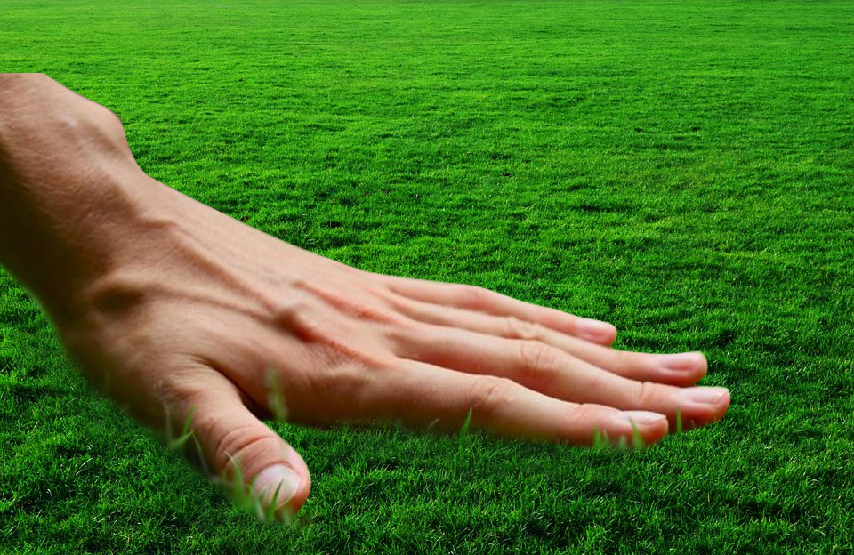 How to start a New Lawn from the seed   How to grow New Lawn