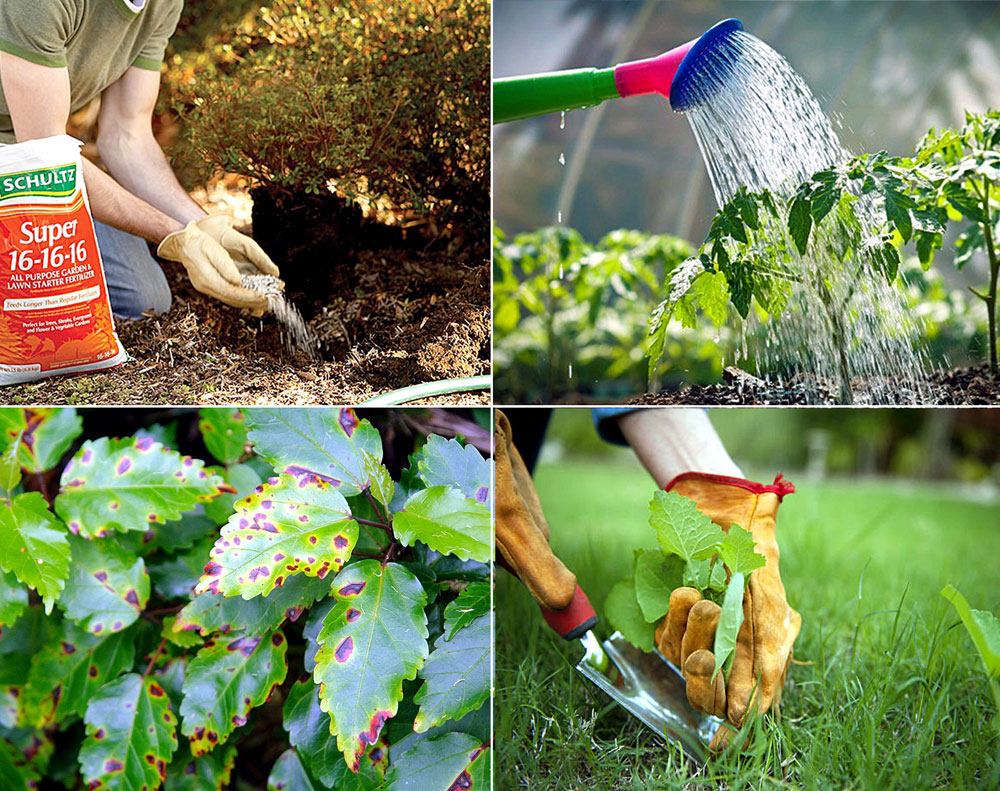 10 ways you prevent the Plant diseases | How to control Plant diseases