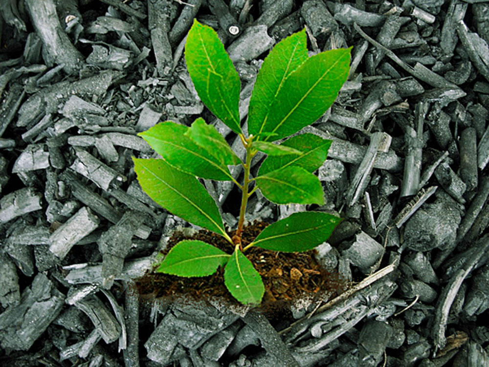 How to use Biochar in the garden | Improve your garden soil