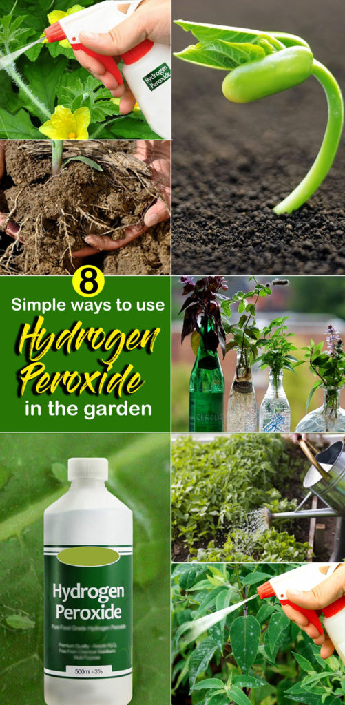 hydrogen peroxide in the garden | how to use hydrogen peroxide | h2o2