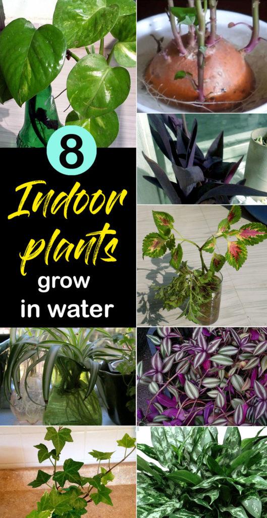 Best Indoor plants | Indoor plant grow in water