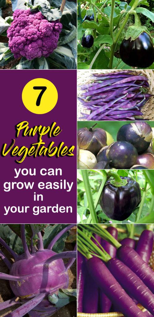 purple vegetables | Colorful vegetables | heirloom and hybrid variety