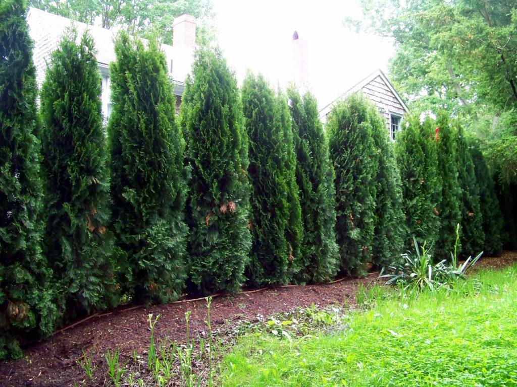 10 Garden Fences