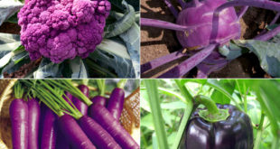 Colorful vegetables | 7 easy growing purple vegetables