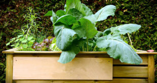 Building Raised Garden Bed easy tips | Nature Bring