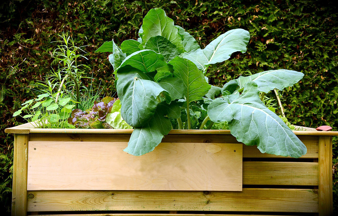 Raised Garden Bed : How to make Raised Garden Bed | Nature Bring