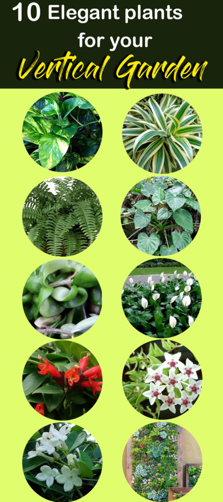 plants for Vertical Garden | living wall
