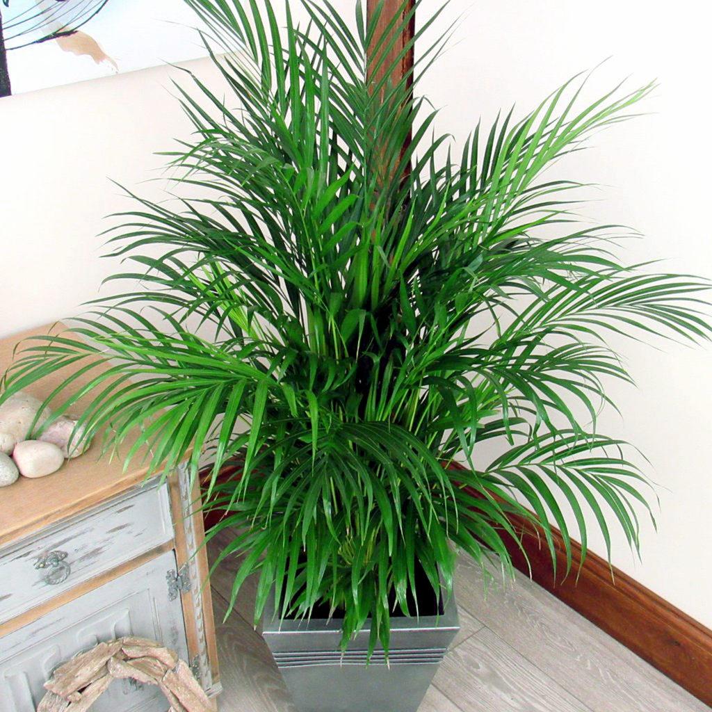 palm tree care