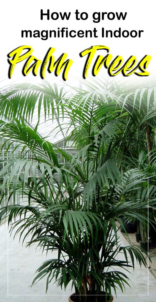 Palm Tree | palm plants | arecaceae