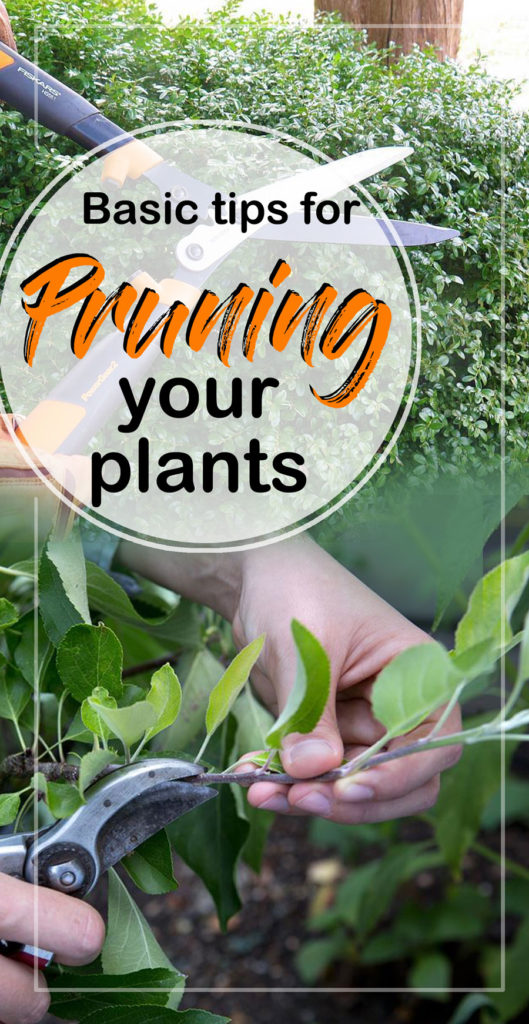How to Prune plants | tree maintenance | Pruning | trimming