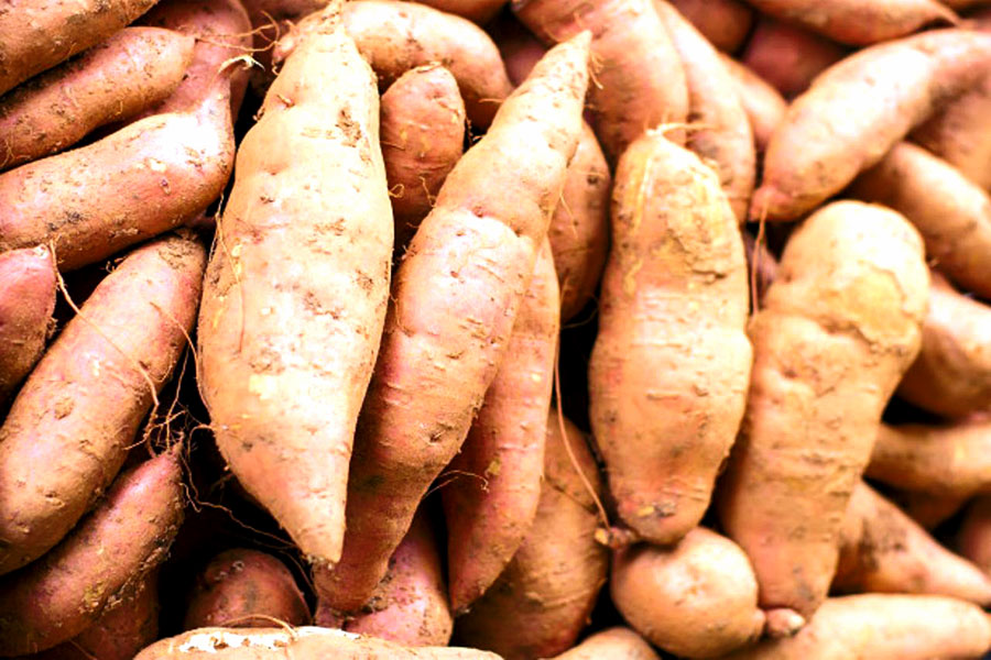How to Grow sweet potatoes | Growing sweet potatoes
