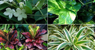 10 Elegant plants for Vertical Garden | living wall