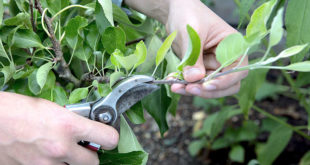 Basic tips for Pruning your plants | Nature Bring