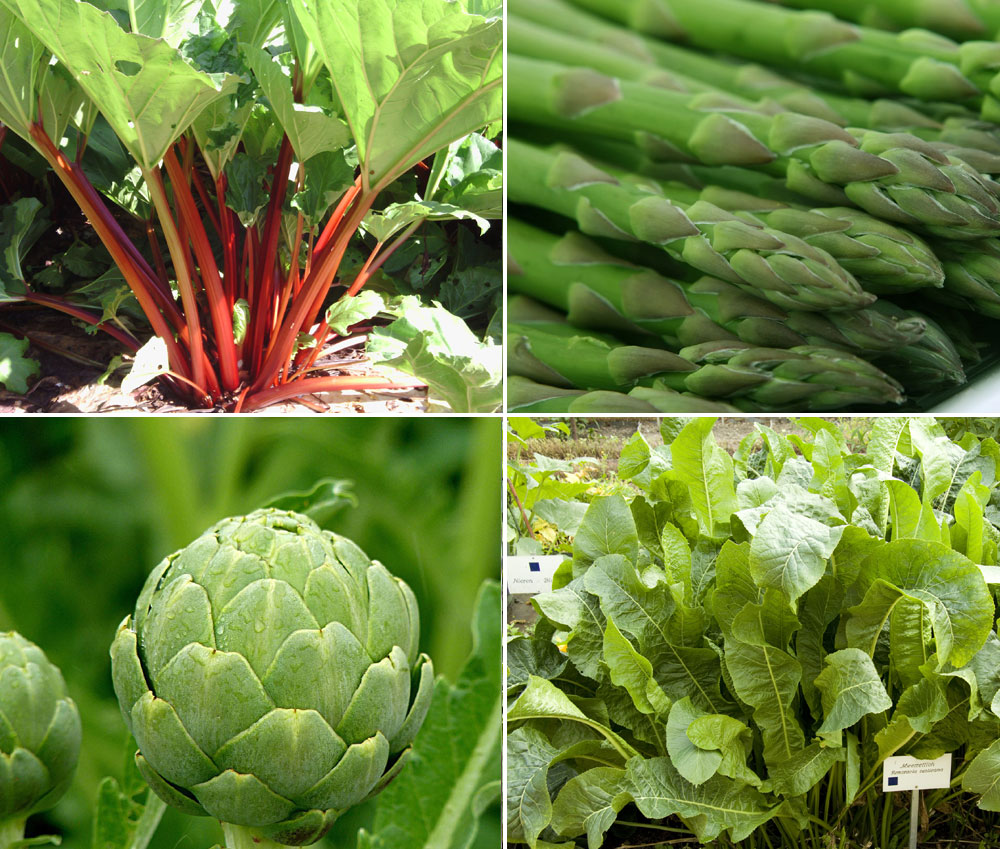 8 Perennials Vegetable you can plant once and savor forever | Perennials Vegetables