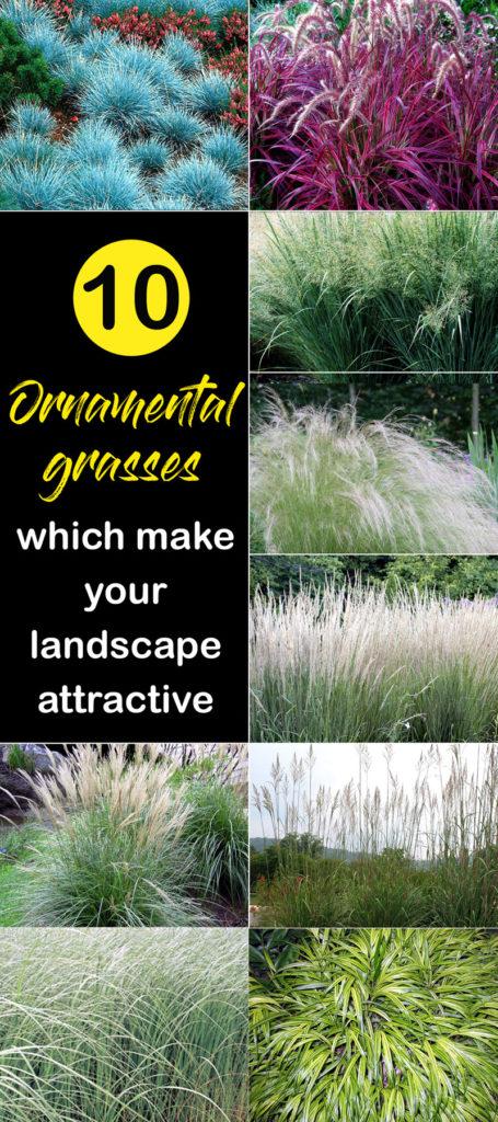Grass | Garden Grass