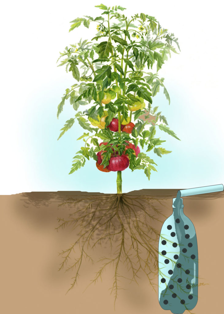 Plastic bottle tomato planter