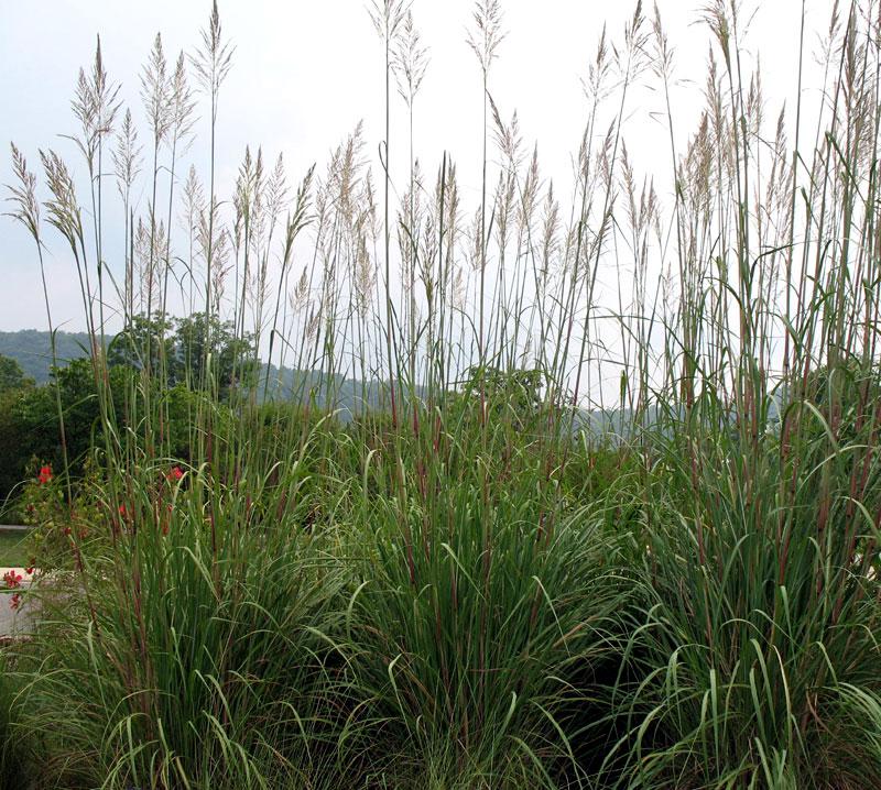 Garden Grass