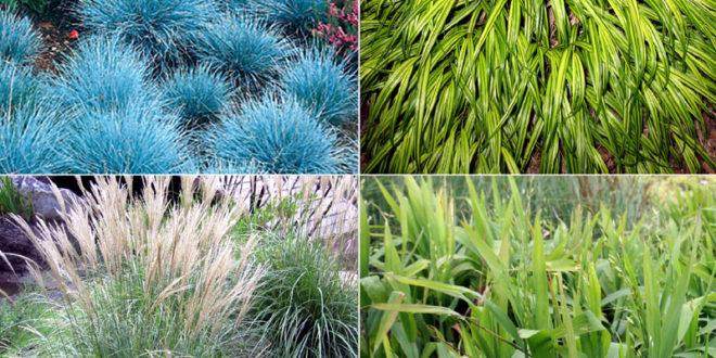 10 Garden Grasses For Your Landscape Ornamental Grasses Garden